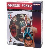 Пазл 4D Master Объемная анатомическая модель Торс человека Фото